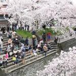 「岩倉桜まつり」は渋滞を避けて駐車場に駐車しよう!