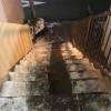 凍結した塾への階段の氷を生徒と一緒に処理したよ!