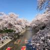 岩倉桜まつりは「満開」「週末」「晴天」で渋滞確定!